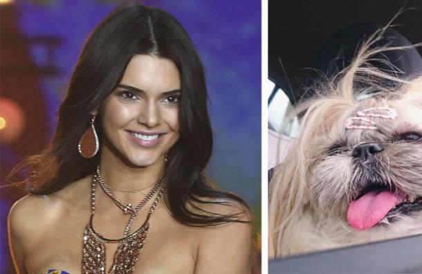 Kuma: La perrita japonesa que saltó a la fama por imitar a Kendall Jenner
